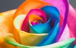 Разноцветное волшебство. Суббота